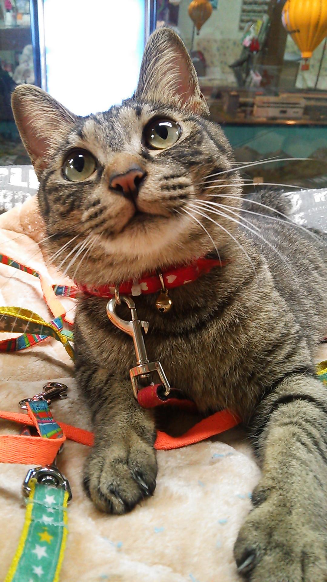 猫と鉄道模型と銭湯と イメージ