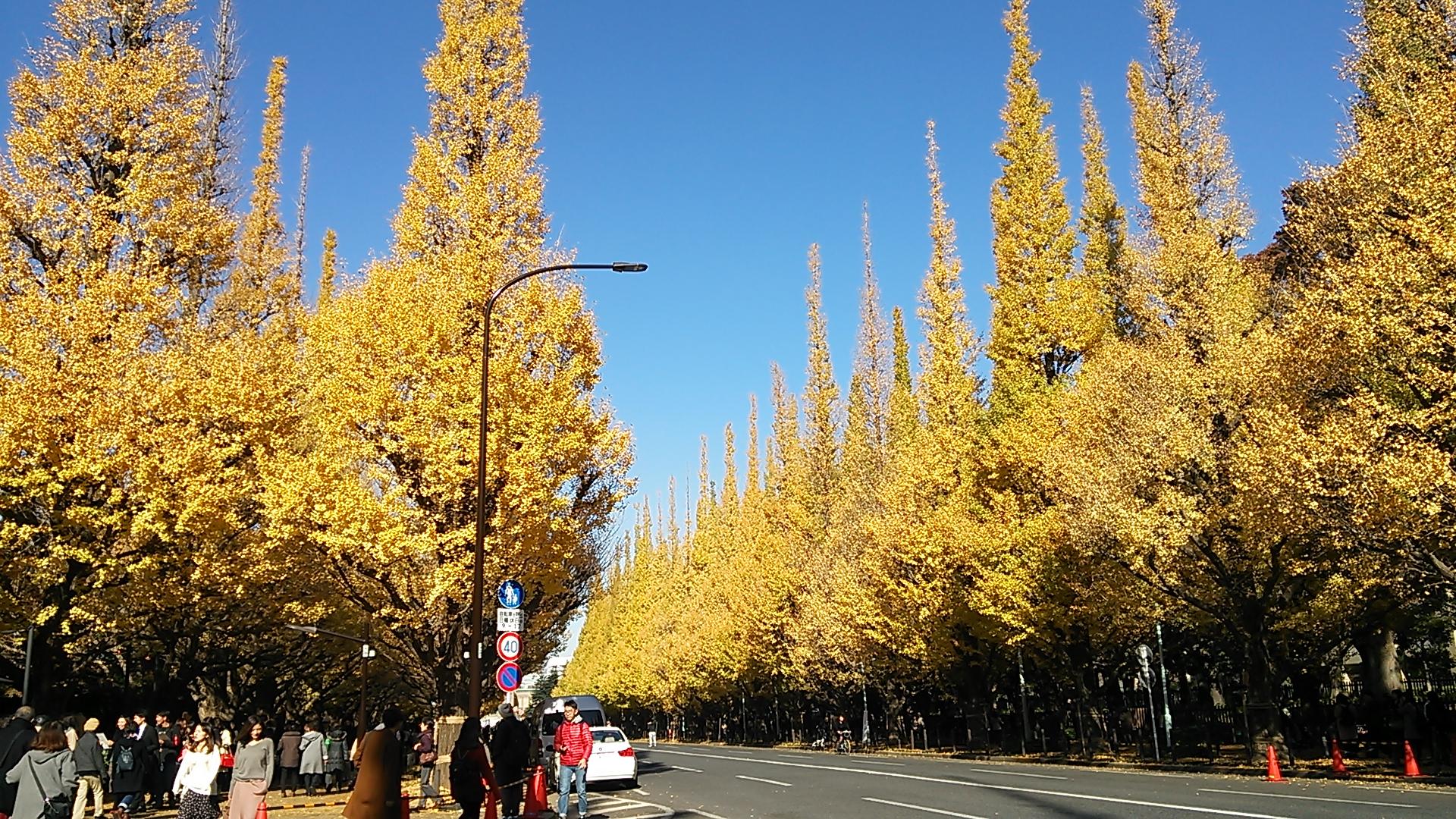 黄金色のいちょう並木で、秋を満喫♪ イメージ