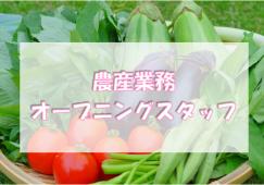 【四ツ谷】青果(農産)◆時給1500円◆駅近店舗 イメージ