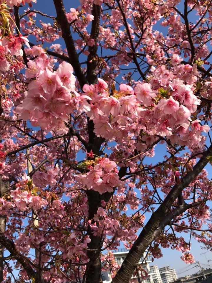 春の息吹が咲き始めました。 イメージ