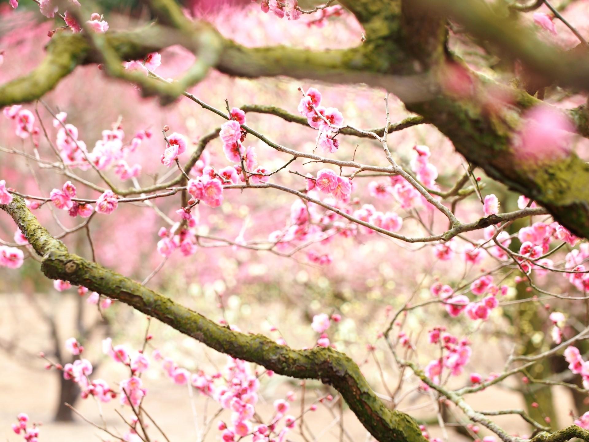 花粉症シーズン到来! イメージ